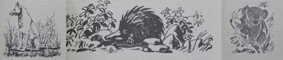 tomek w krainie kangurów - ilustracje
