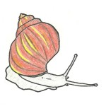 limaczek Ślimaki - Snails