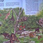 przyroda-morza-704x430 Przyroda - Moja pierwsza encyklopedia