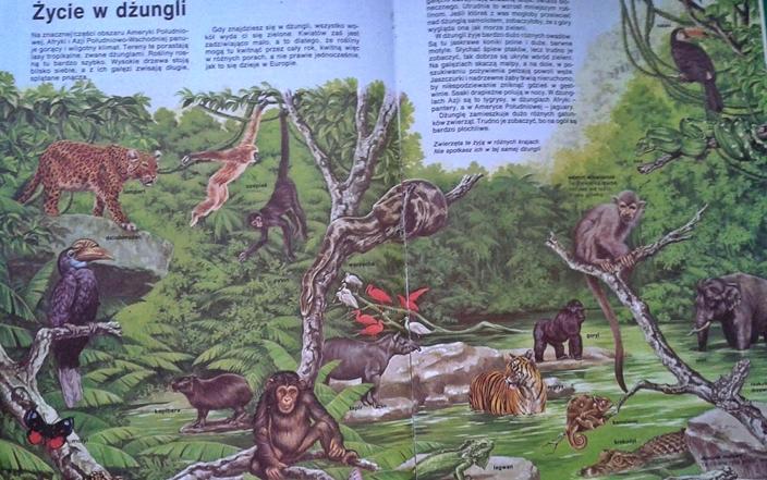 przyroda - ekosystem dźungli
