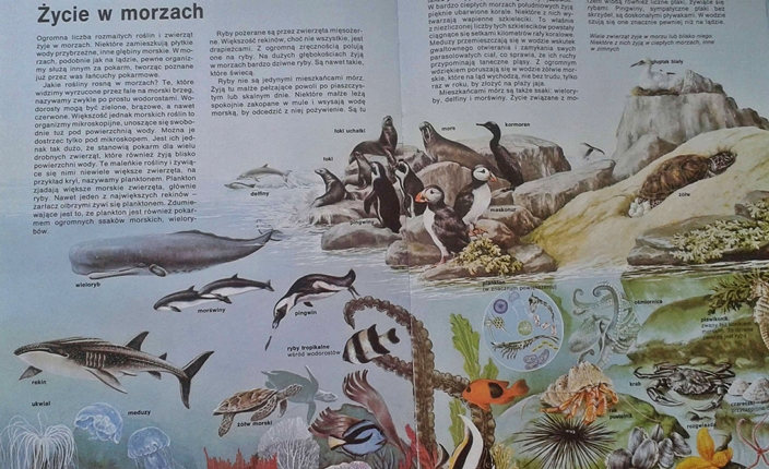 przyroda - ekosystemy mórz i oceanów