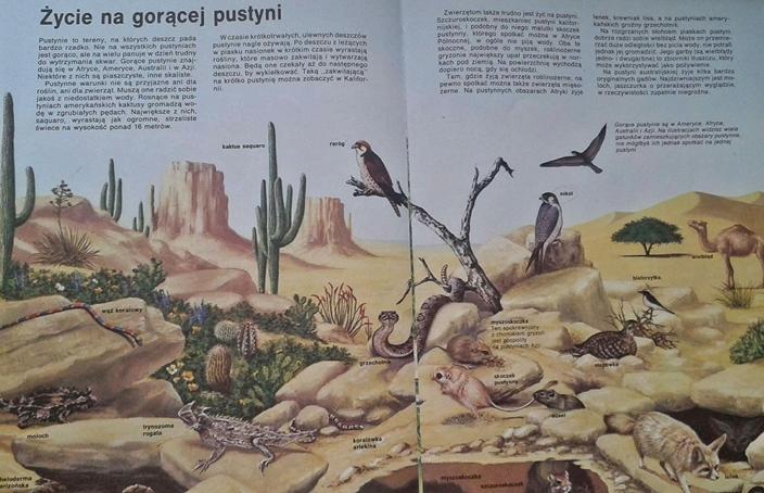 przyroda - ekosystem pustyni
