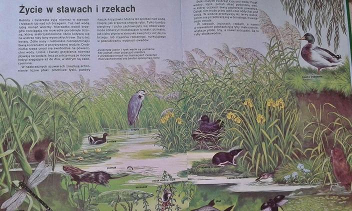 przyroda - ekosystem stawów i rzek