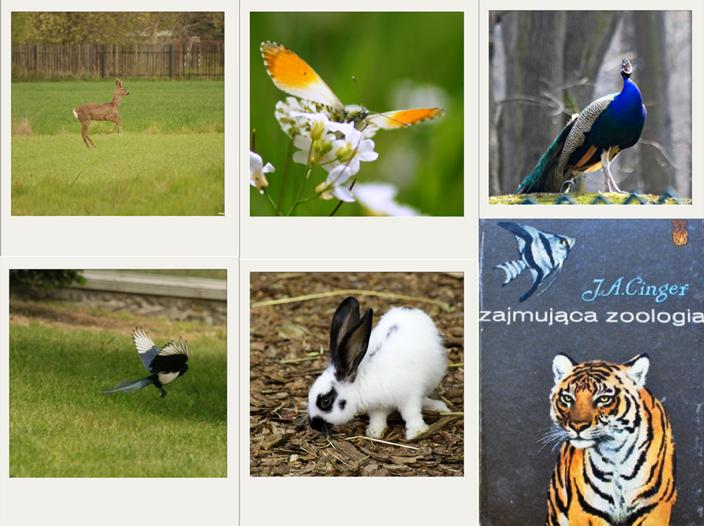 zajmująca zoologia