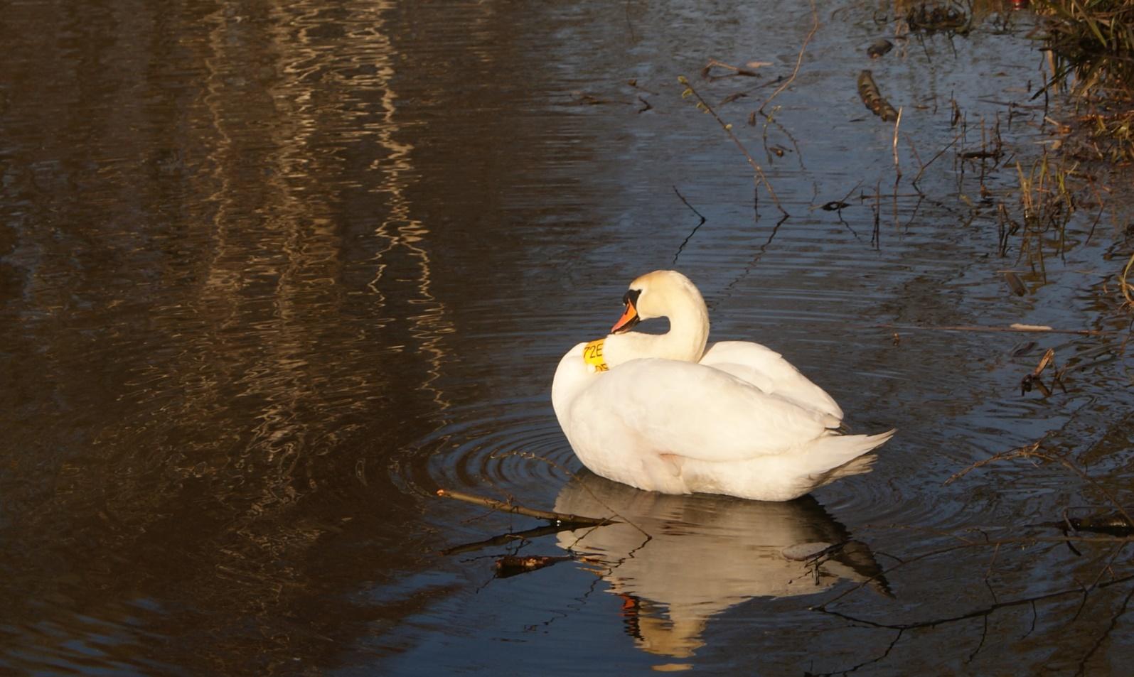 abądź Obserwowanie ptaków