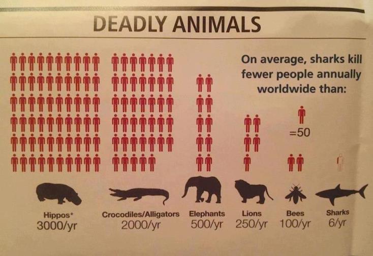 śmiercionośne zwierzęta