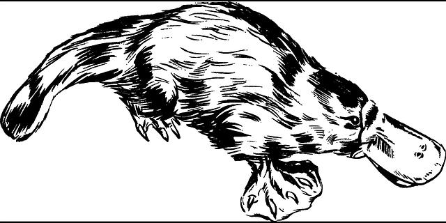 jadowite-ssaki-dziobak Jadowite ssaki
