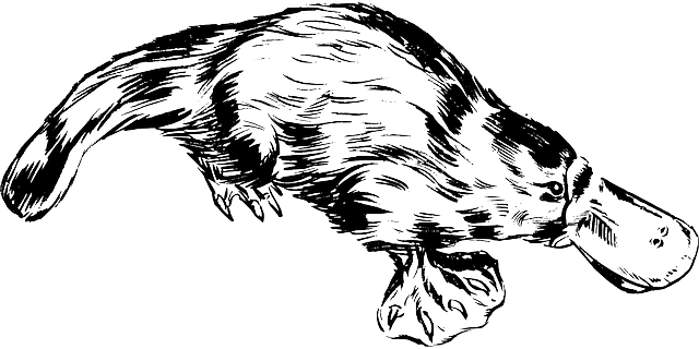 jadowite-ssaki-dziobak