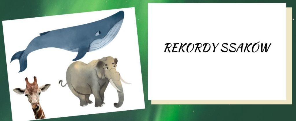 rekordy ssaków