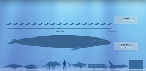 miercionośne-zwierzęta Rekordy wśród ssaków