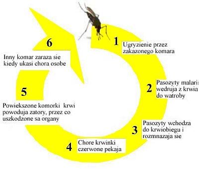 malaria-mapa Światowy Dzień Malarii