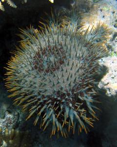 wybielanie-raf Na ratunek rafom koralowym