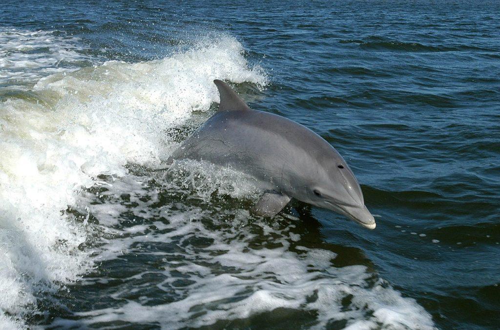 delfin-1024x676 MMO i PAMO, czyli praca dla biologa