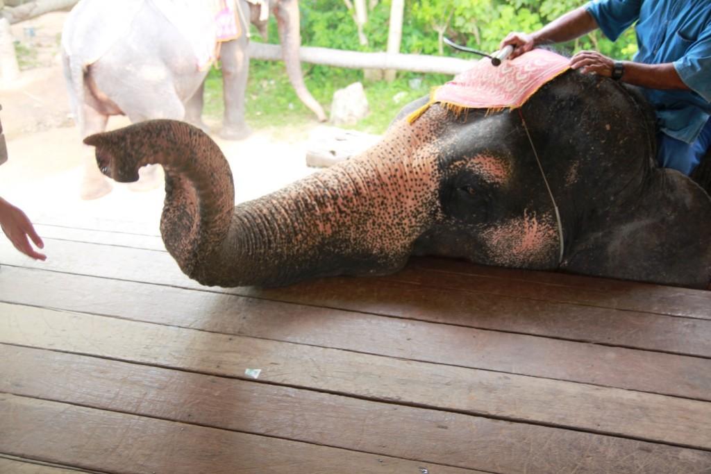 trąba2-216x300 Przygoda ze słoniem