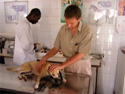 volunteer-with-dog-in-ghana Wolontariat, czyli przepis na udane wakacje