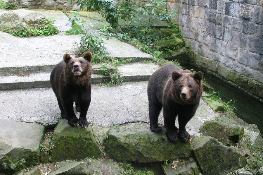 Niedźwiedzie Rekordy fauny Polski
