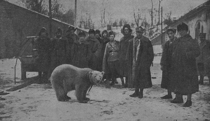 Wojtek Niedźwiedź w kulturze człowieka