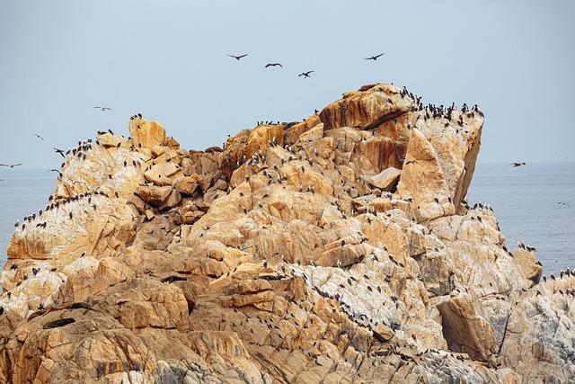 Guano - kolonia kormoranów