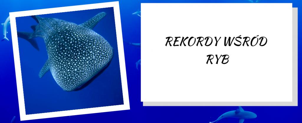 Rekordy wśród ryb