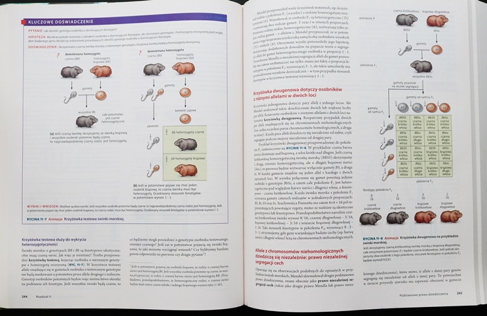 biologia-villeego-allele Biologia Villeego - biblia biologów