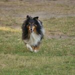 pies-5-704x438 Psiaki - galeria zdjęć