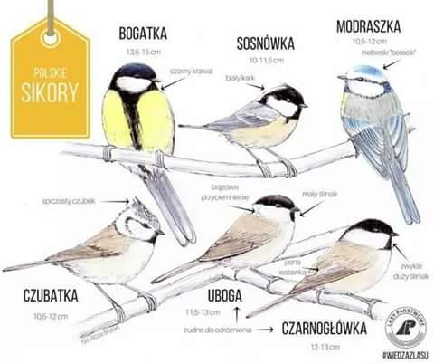 sikory Karmnik dla ptaków