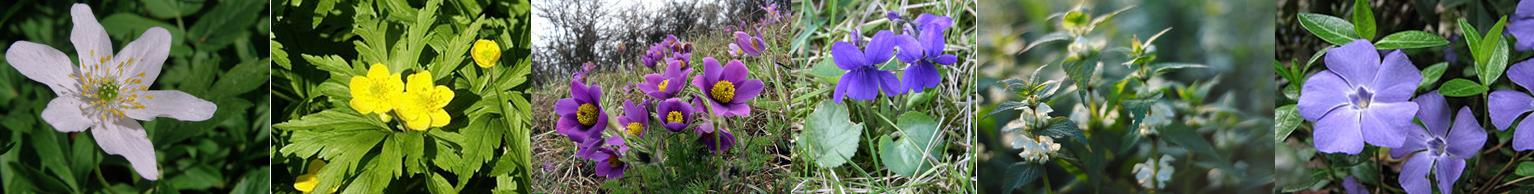 kwiaty Przyrodnicze wyprawy - marzec