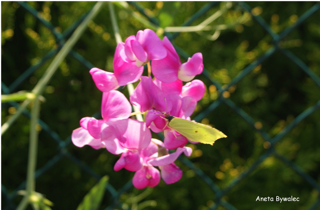 kwiaty-kw-1024x159 Przyrodnicze wyprawy - kwiecień