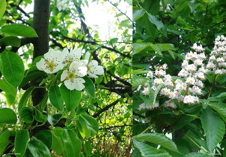 maj kwiaty drzewa