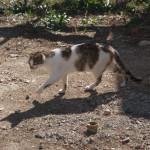 jaszczurka-704x454 Fauna wyspy Murter