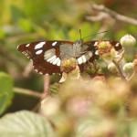 jaszczurka-704x454 Fauna wyspy Murter - galeria zdjęć