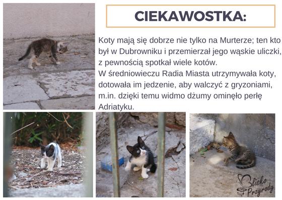 fauna wyspy Murter - koty
