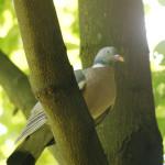 mewa-śmieszka-704x454 Ptaki