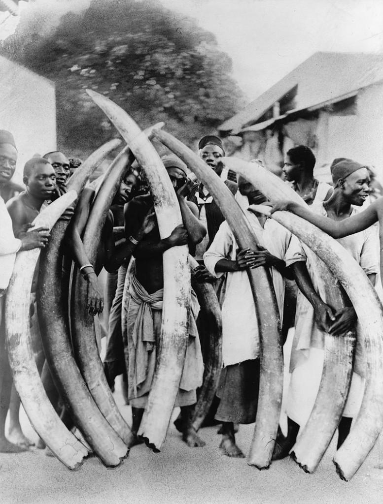 ciosy-777x1024 Czy słonie mają kły?