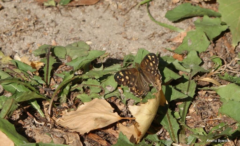 październik-1024x895 Przyrodnicze wyprawy - październik