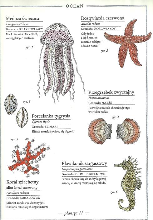 ilustrowany inwentarz zwierząt - ocean