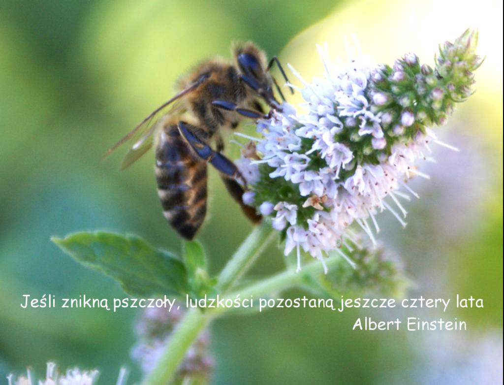 pszczoła6-1024x782 Historia pszczół - Maja Lunde