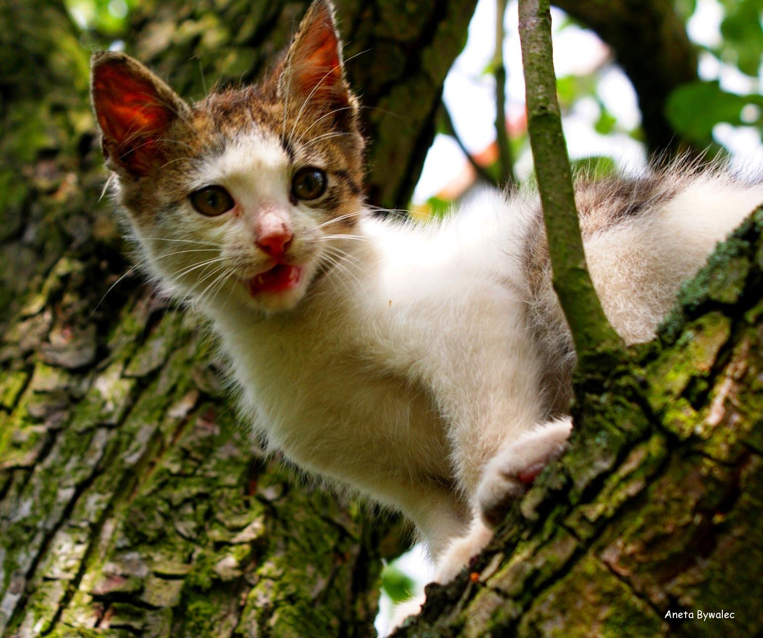 kot w kulturze człowieka - okładka