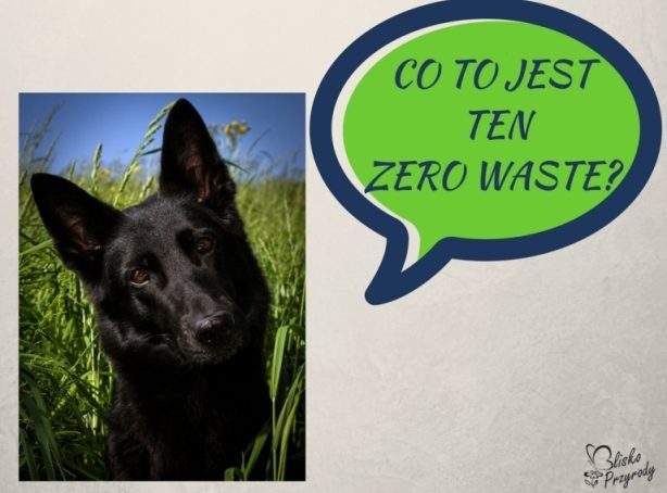 co to jest ten zero waste?