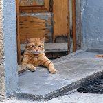koty - sjesta