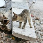 koty - kotek odkrywca