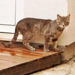 koty - nie patrz na mnie