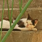 koty - śpioch