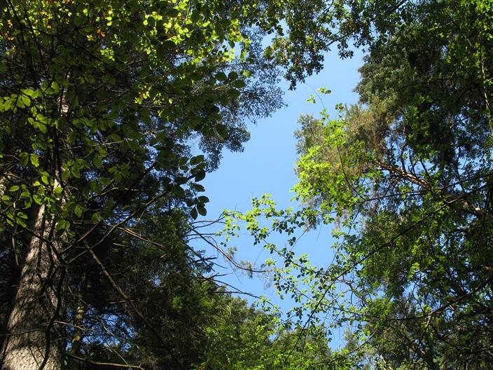 sekretne życie drzew - drzewa