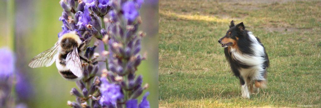 jak-fotografowac-przyrode-obiektyw-1024x346 5 porad jak fotografować przyrodę