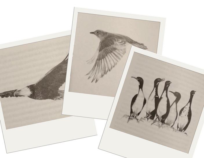 zadziwiający świat ptaków -szkice