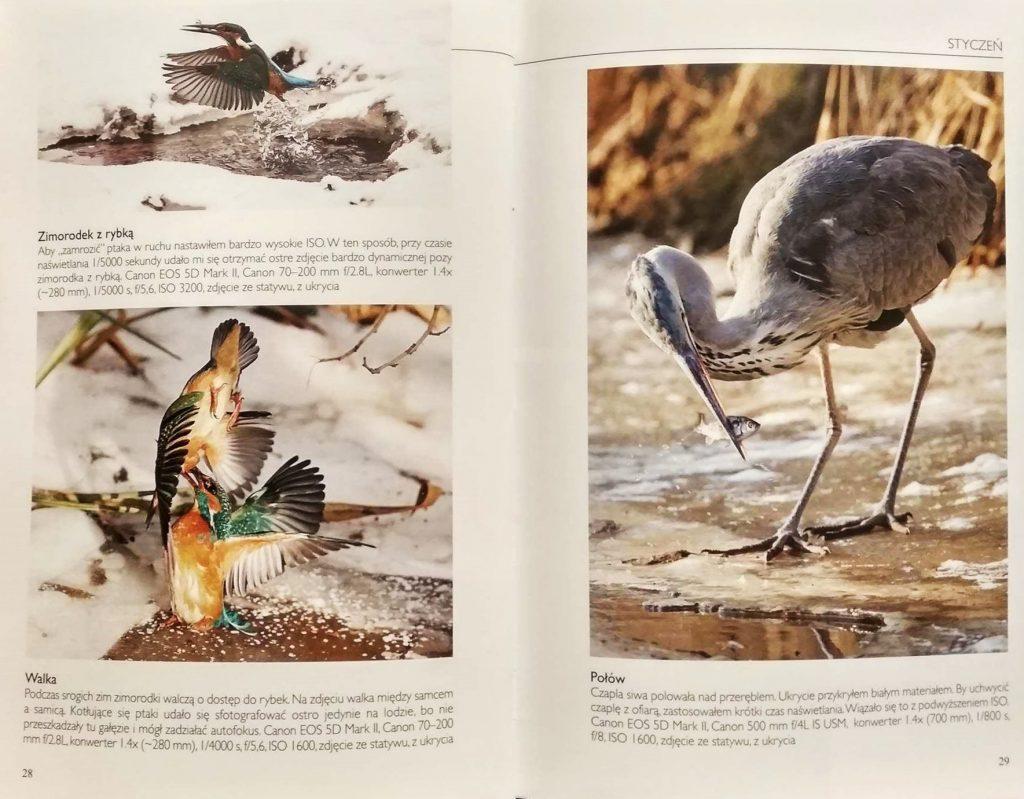 fotografowanie-polskiej-przyrody-zdjęcia Grzegorza Bobrowicza