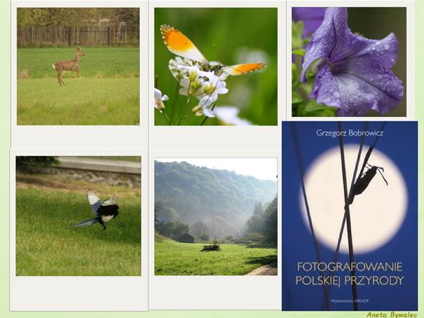 fotografowanie polskiej przyrody - okładka