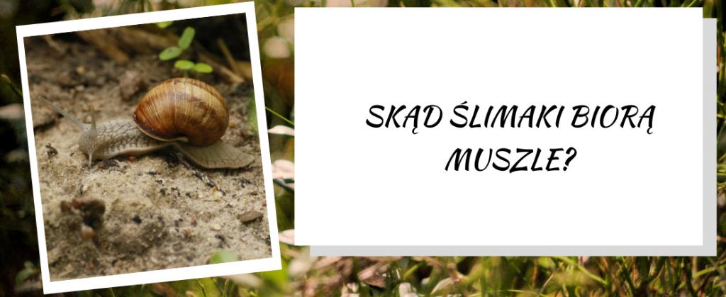 Skąd ślimaki biorą muszle?