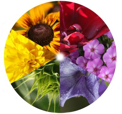 barwy w ogrodzie - koło barw